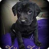 Adopt A Pet :: Kit Kat - Denver, NC