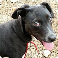Adopt A Pet :: Lupita-pending adoption - East Hartford, CT