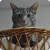 Adopt A Pet :: Gracie - Kettering, OH