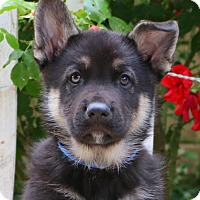 Adopt A Pet :: Oakley von Sequoia - Thousand Oaks, CA