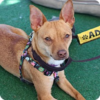 Adopt A Pet :: Nikki - Yuba City, CA