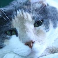 Adopt A Pet :: Gina - Metairie, LA