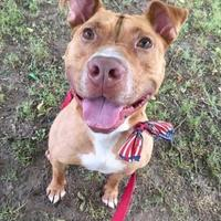 Adopt A Pet :: Cordell - Media, PA