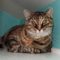 Adopt A Pet :: Sookie - Fairfield, IA