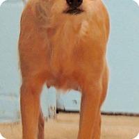 Adopt A Pet :: Giovanna - Joplin, MO