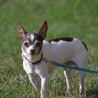 Adopt A Pet :: Dakota - Fairfield, OH