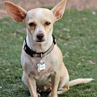 Adopt A Pet :: Esme - Phoenix, AZ