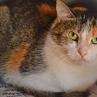 Adopt A Pet :: AURORA - Toledo, OH
