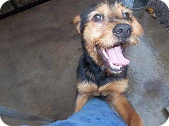 Terrier (Unknown Type, Medium) Mix Dog for adoption in Henderson, North Carolina - Teddy