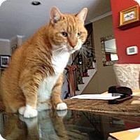 Adopt A Pet :: Slushie - Cranford/Rartian, NJ