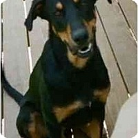 Adopt A Pet :: Chief--adopted! - New Richmond, OH
