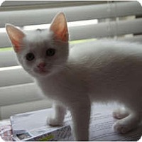 Adopt A Pet :: Flopsy - Xenia, OH