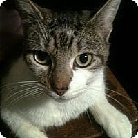 Adopt A Pet :: Roxy - Brooklyn, NY