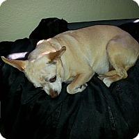Adopt A Pet :: Cisco