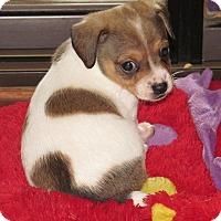 Adopt A Pet :: Rascall - Torrance, CA