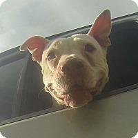 Adopt A Pet :: Nettie - Houston, TX