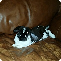 Adopt A Pet :: Vander - Williston, FL