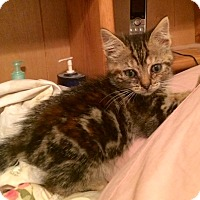 Adopt A Pet :: Cindy - Redondo Beach, CA