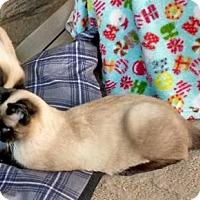 Adopt A Pet :: Sasha & Peter (FCID# 12/06/16 - 133,130 (WG Trap) - Greenville, DE
