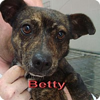 Adopt A Pet :: Betty - Coleman, TX