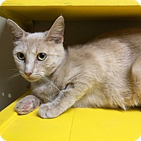 Adopt A Pet :: Sky - Maryville, MO