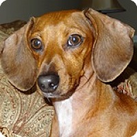 Adopt A Pet :: Sarah Sparkler - Houston, TX