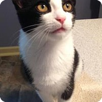 Adopt A Pet :: Paco - Anderson, IN