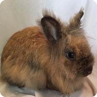 Adopt A Pet :: Chupie - Woburn, MA