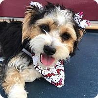 Adopt A Pet :: Nebraska - Redondo Beach, CA