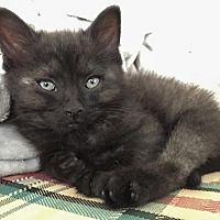 Adopt A Pet :: Twinkle - South Bend, IN