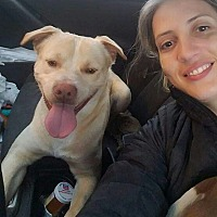 Adopt A Pet :: Koda - Greenville, NC