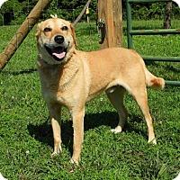 Adopt A Pet :: Ace - Elmwood Park, NJ