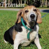 Adopt A Pet :: Truman - Bradenton, FL