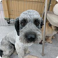 Adopt A Pet :: Sargent - Las Vegas, NV