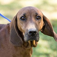 Adopt A Pet :: Marietta - Brownsboro, AL