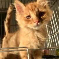Adopt A Pet :: Fredrick - Clarksdale, MS
