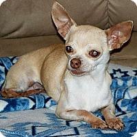 Adopt A Pet :: MINDY - AUSTIN, TX