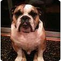 Adopt A Pet :: otis - conyers, GA