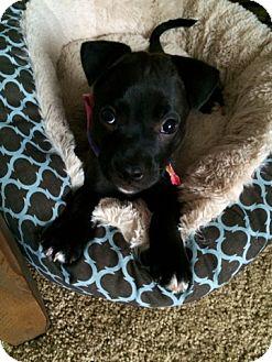 Terrier (Unknown Type, Medium) Mix Puppy for adoption in Mount Juliet, Tennessee - Betty Boop