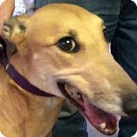 Adopt A Pet :: Jewel - Pearl River, LA