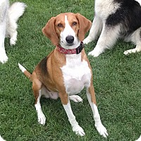 Adopt A Pet :: Jasmine - Bowie, MD
