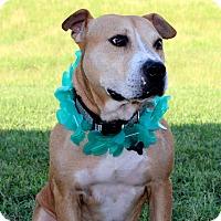 Adopt A Pet :: Kenny - Mount Juliet, TN