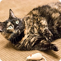 Adopt A Pet :: Mrs Peeps - Chicago, IL