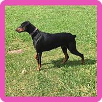 Adopt A Pet :: Maggie - killeen, TX
