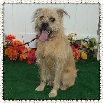 Terrier (Unknown Type, Medium) Mix Dog for adoption in Marietta, Georgia - JOY (R)