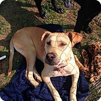 Adopt A Pet :: Jewel - East Rockaway, NY