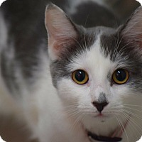 Adopt A Pet :: Lucy - Willington, CT