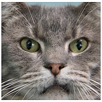 Adopt A Pet :: Darnell - Forked River, NJ