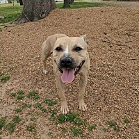 Adopt A Pet :: Gypsy - Covington, TN