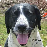 Adopt A Pet :: Maxwell - Warren, PA